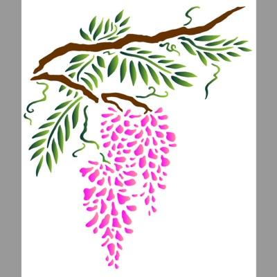 Branche de glycine