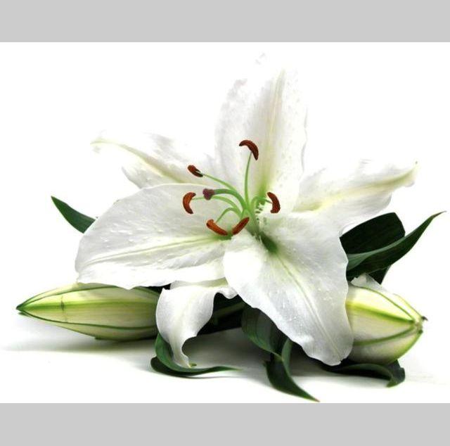 Autocollant fleur de lys blanc
